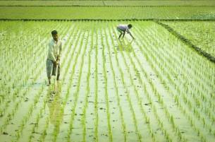 ভোলায় কৃষকরা বোরো  আবাদে ব্যস্ত