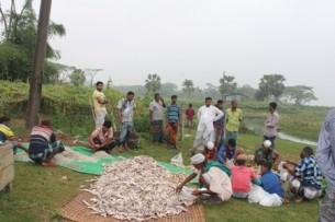 ভোলায় বেহুন্দি জাল দিয়ে  নিধন করা হচ্ছে বিভিন্ন প্রজাতির মাছ